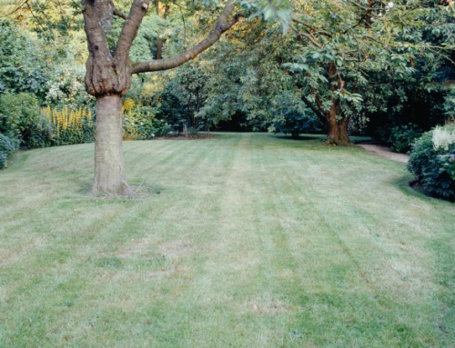 How Soil Strength and Hydration Management Impact The Look of Your Lawn