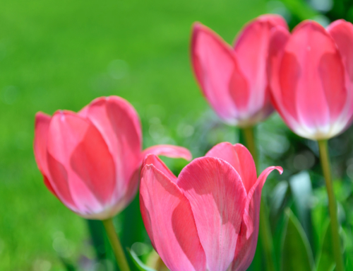 Spring Has Sprung! It's Time to Think About Your 2020 Tree, Shrub, Lawn Care Services